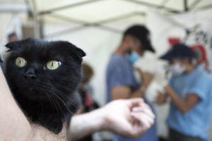 Il gatto Antar, sopravvissuto all'esplosione, è scappato dalla sua casa. Ora ha ritrovato i suoi umani che lo avevano cercato ovunque (credits:FOURPAWS/HristoVladev)
