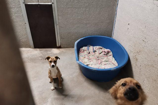 Cuccioli al canile di Trento