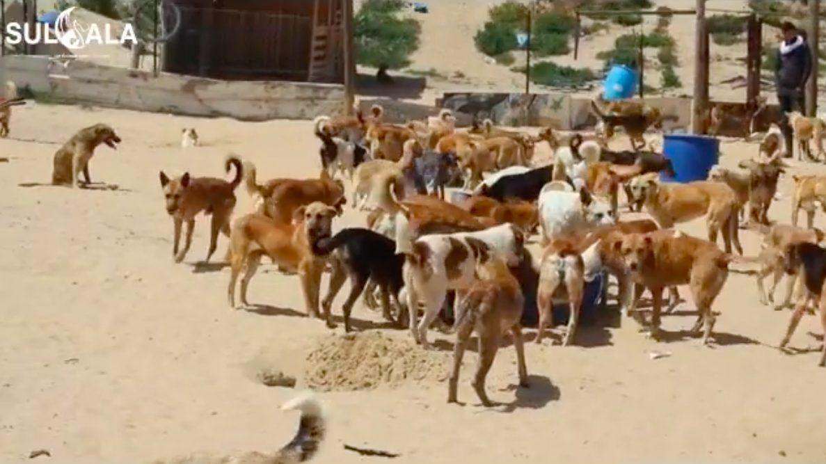 Un'immagine dei cani che vivono nel nel rifugio sorto nel 2020 a Gaza CIty (credits@SalulaAnimalRescue)