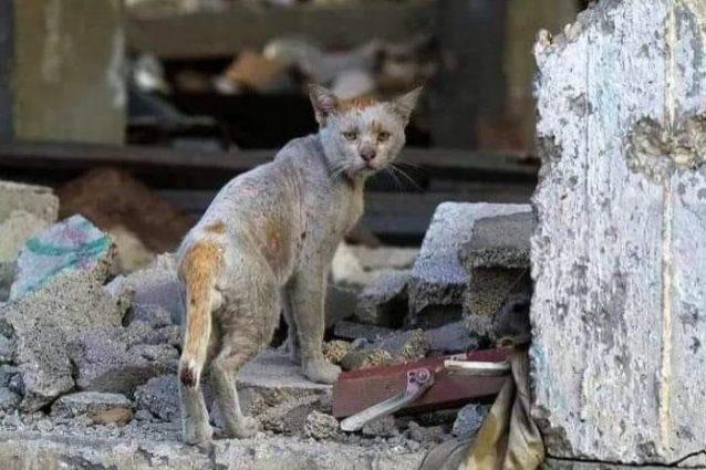 Un gatto in fuga dalla guerra (credits: @SulalaAnimalRescue)