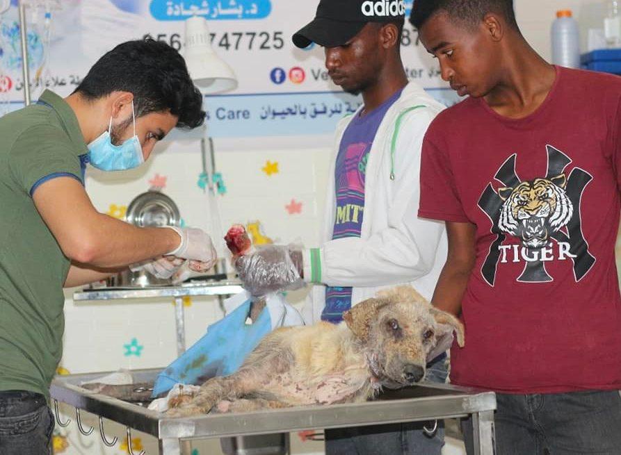 Il lavoro dei volontari al rifugio, per curare gli animali che arrivano feriti (credits: SulalaAnimalRescue)