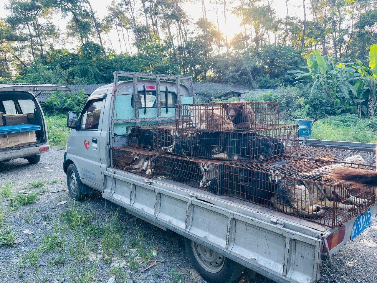Il camion da cui sono stati sottratti e portati in salvo 13 cani. Yulin 2021. (credits: APA Action Project Animal Davide Acito)