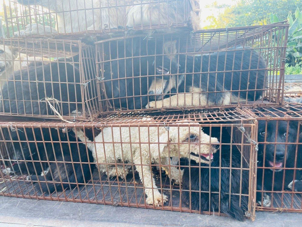 Cani ammassati dentro le gabbia in attesa della vendita e della morte. Yulin 2021. (credits: attivisti cinesi)