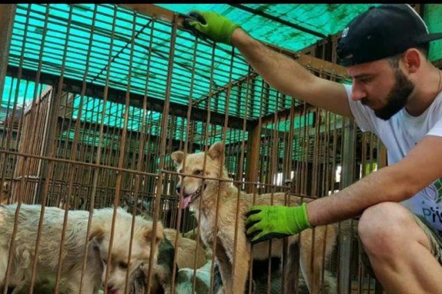 Davide Acito, fondatore italiano di APA Action Project Animal, al Festival di Yulin (credits@Davide Acito)