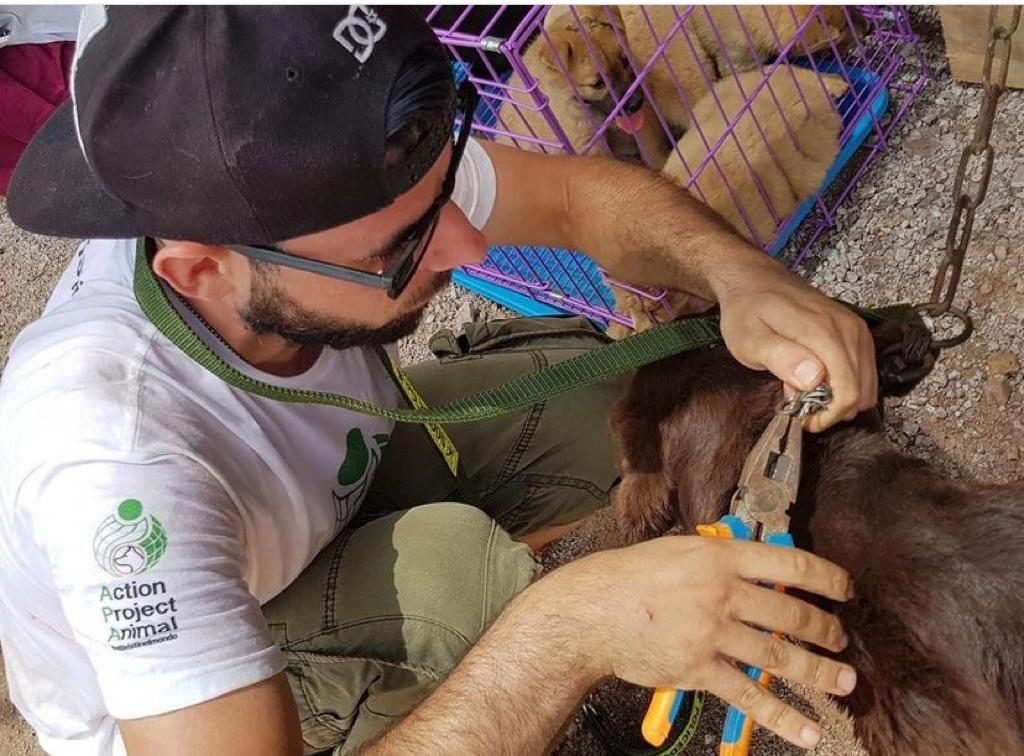Davide Acito mentre libera un cane durante il Festival di Yulin (credits@Davide Acito)