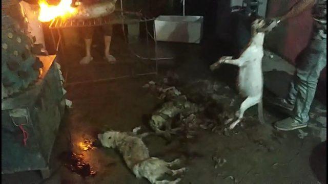 Immagini drammatiche di cani uccisi durante il festival di Yulin del 2018 (credits:@HSI)
