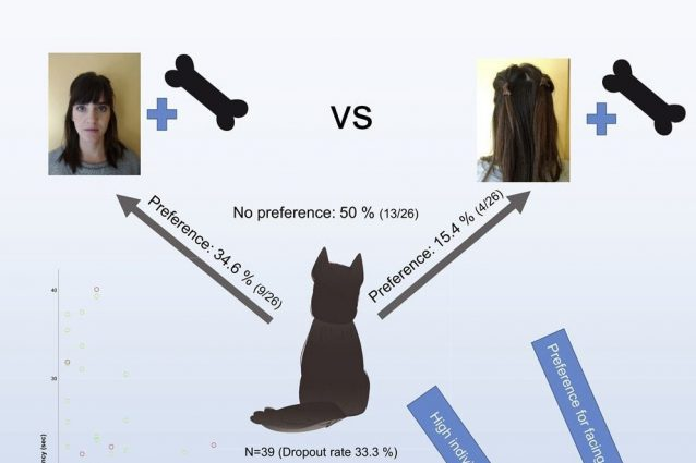 ©Bolló, H., Kiss, O., Kis, A., & Topál, J. (2021). The implicit reward value of the owner's face for dogs. iScience, 102763.