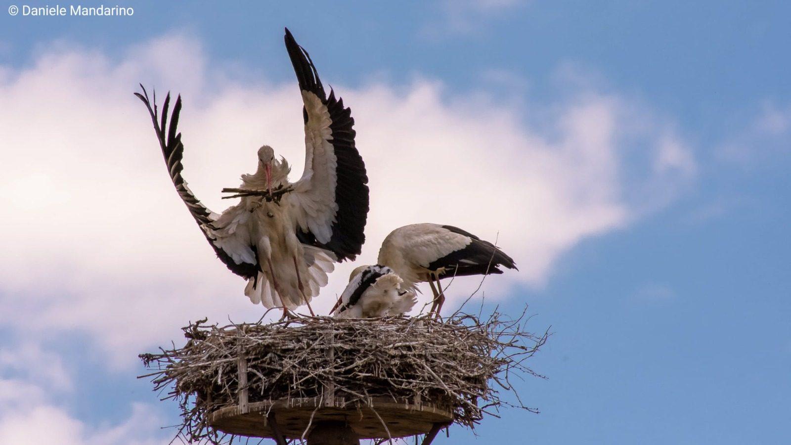 Un nido artificiale su un traliccio (credits:@DanieleMandarino)