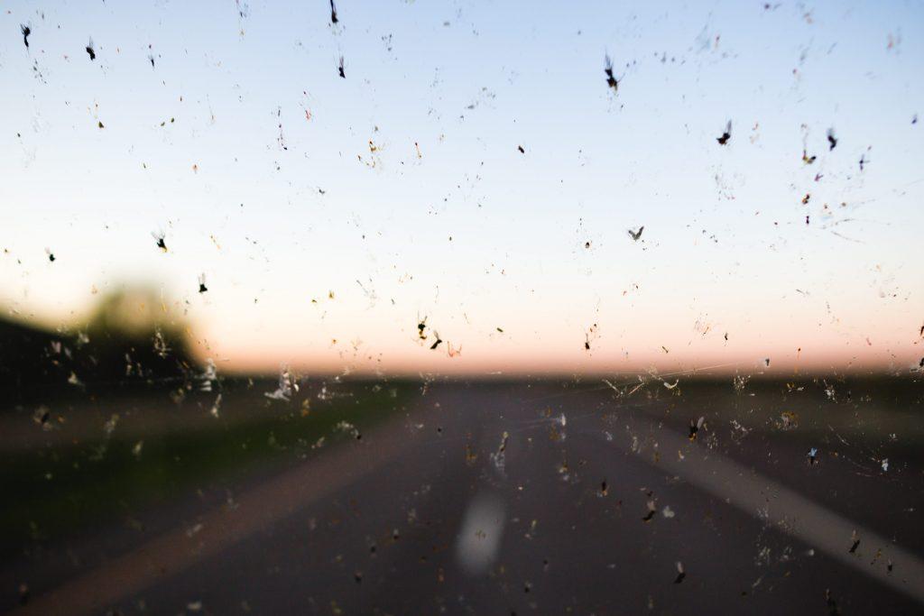 Negli ultimi decenni le popolazioni di insetti sono diminuite notevolmente. Questa rapida e silenziosa apocalisse è stata chiamata anche «il fenomeno del parabrezza»