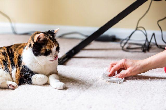 perché il gatto sterilizzato marca il territorio?