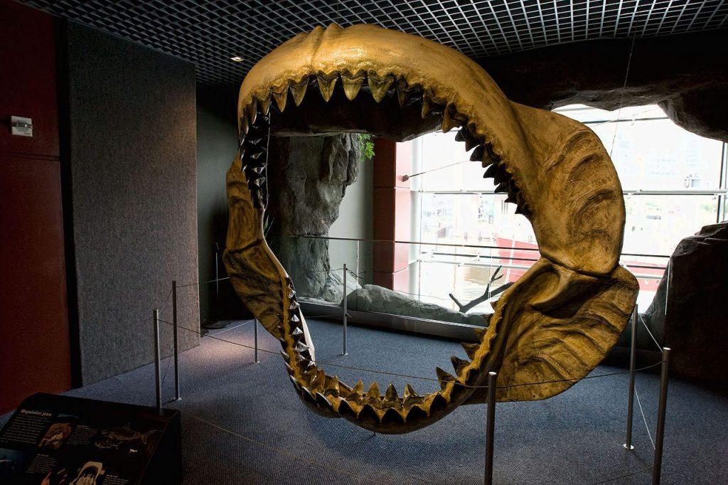 Ricostruzionedi una mascella di megalodonte in mostra al National Aquarium di Baltimora